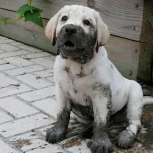 filthydog